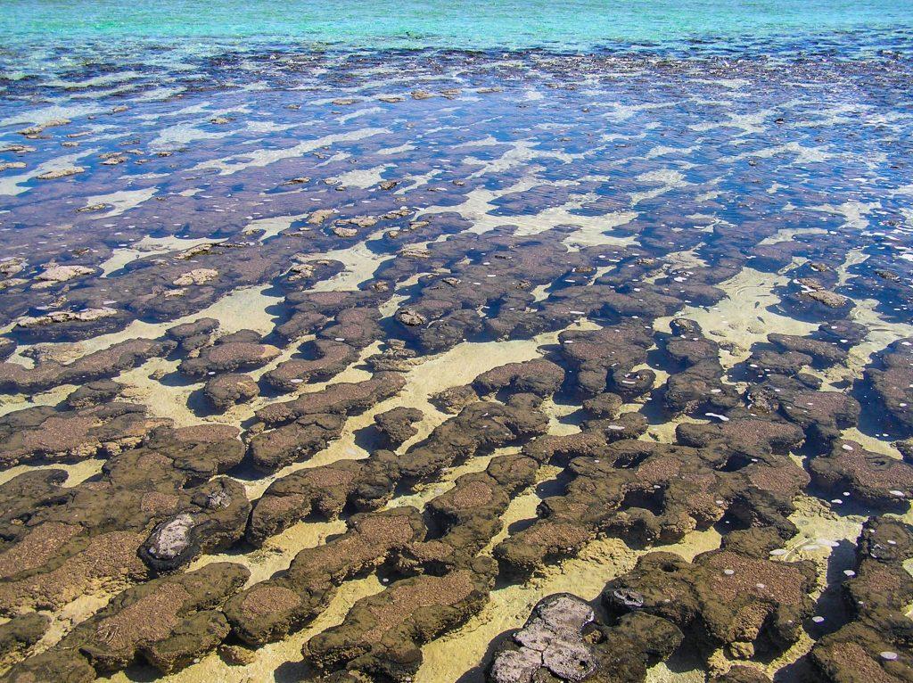 Stromatolites at Hamelin Pool, Shark Ba
